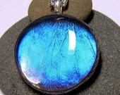 Real Butterfly Wing Necklace Blue Morpho Glass Pendant