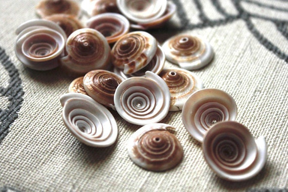 Natural Shell beads - 20 beads - assorted sizes - swirl, white, peach, brown, pale pink, blush, ivory, cream