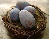 Carolina Wren Egg Bead