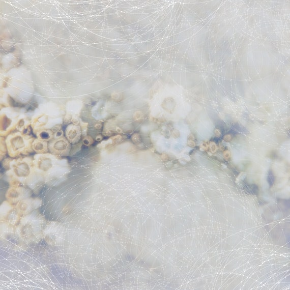 Misty Barnacles Constellation : Photographic Print of barnacles on a stone awash in muted earth tones,  graphic overlay of lines & dots