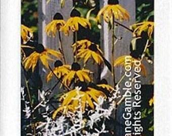Black-eyed Susans, Handmade Photographic Note Card