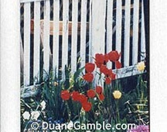 Red Tulips and Pickett Fence, Handmade Photographic Note Card by CreativePhotoProducts