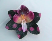 Orchid Flower Hair Clip Black with Pink Polka Dots