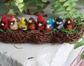 Family Row of Birds In a Nest