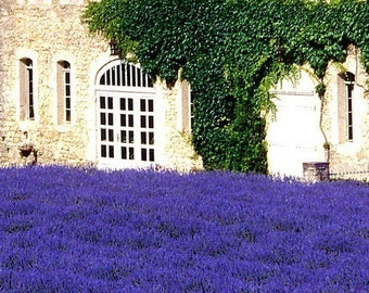 French Lavender Signed Fine Art Print either on canvas on wood or professional matte photo paperper