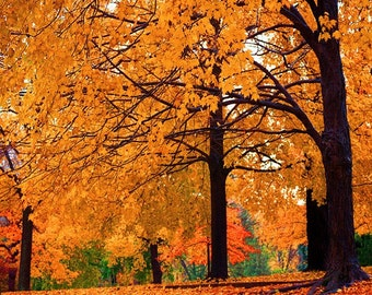 Fall Colors in Portland Oregon on Canvas on Panel or Fine Art Matte Print