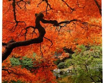 Portland Japanese Garden Red Maple 11 x 14 Gallery Wrap Canvas