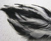 1 BLACK AND WHITE Feather Pad Skunk Colors
