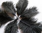 2 Ostrich Feathers BLACK Tiny Mini Baby Plumes Midnight Ebony Crow