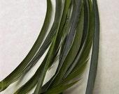 20 DARK GREEN Biot Sword Feathers