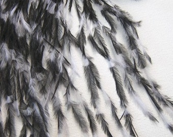 35 pcs - OSTRICH Feathers Stenciled Black & White PREMIUM