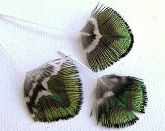 16 Tiny Peacock Feathers Green Gold Brown