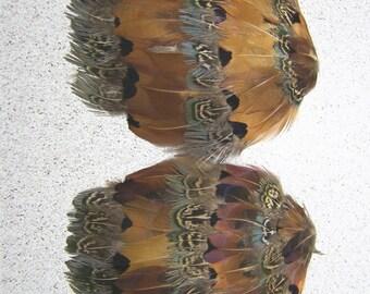 FEATHER PADS, Ringneck Dark Heart Pheasant, 2 Pcs