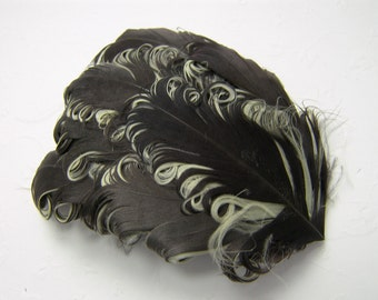1 BROWN on CHAMPAGNE Curly Feather Pad, Nagorie Feathers