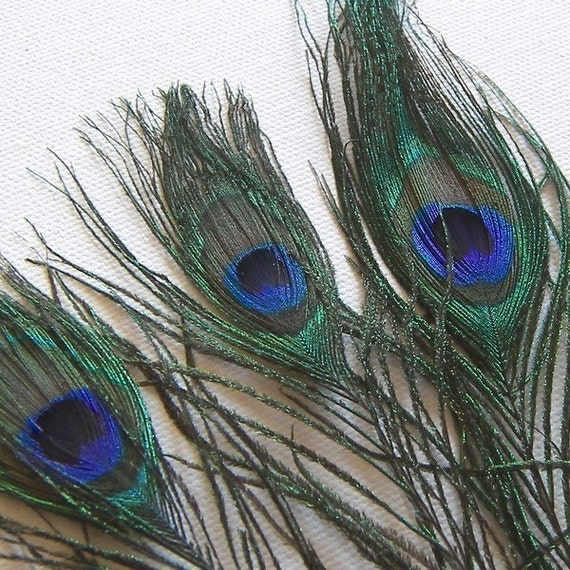 SMALL Peacock Feather Stems, 6 to 7 Inches Long, 6 Pcs