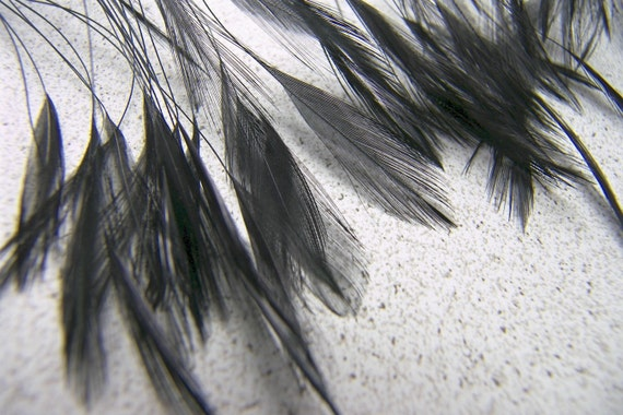 "BLACK Stripped ""Eyelash"" Rooster  Feathers, 15 Pcs"