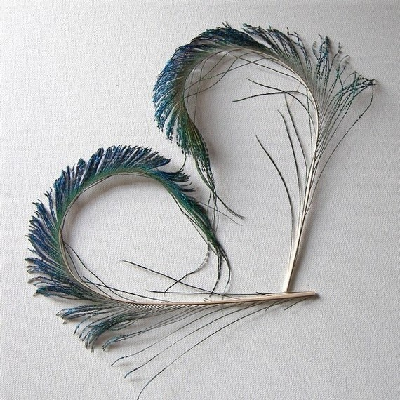 Peacock Feather Spears Swords Curled, 1 Pair