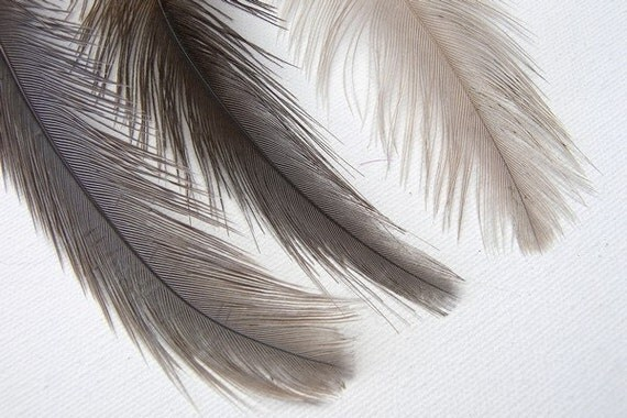 2 Natural Rhea Feathers, 7 to 8 Inches Long
