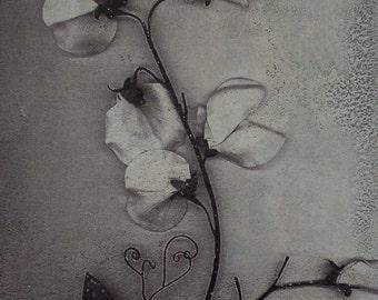 Metal photo art Sweet Pea in Winter 5x7in