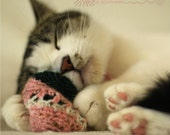 Sample Pack Catnip Cat Toys - All Proceeds Donated