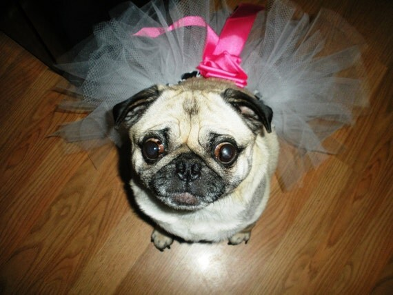 SALE White Tutu for your Pug or other breed Dog