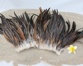 Strung Natural/Iridecent Rooster Coque Tails 10-12 inches in height, natural coque rooster feathers, Tahitian Costume