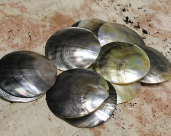 2 1/2 to 3 inch inch diameter blacklip mother of pearl, mop round shell-12 shells-pendant, oyster, tahitian costume