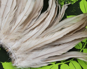 Coque feathers in ivory, creme, tan, beige color- length 11-14  inches length- bleached-