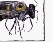Carpenter Bee Hand Painted Blank Greeting Card