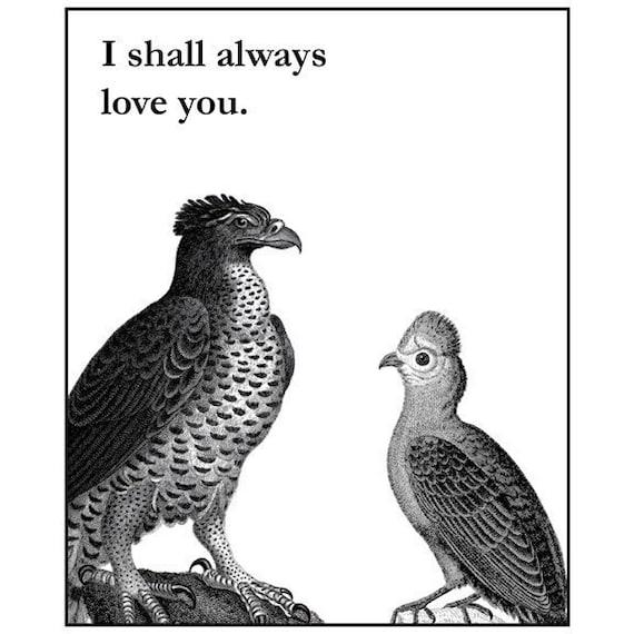 Outlaw Love Birds - 8 x 10 Art Print
