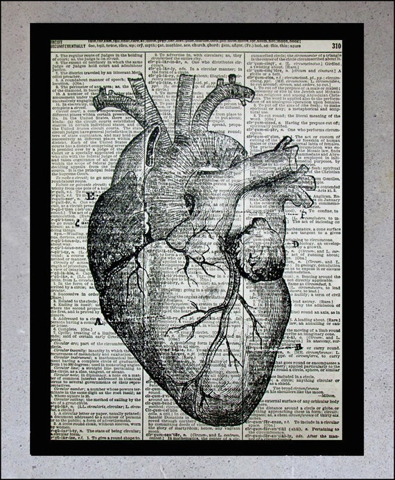 Vintage Anatomical Drawing Items similar t...