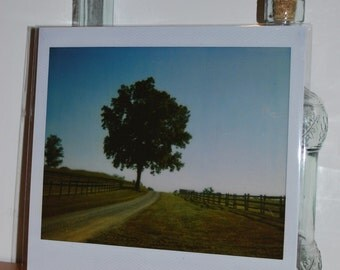 Polaroid Instant Enlargement - Tree, Fence & Path