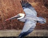 The Flying Pelican