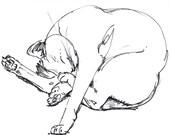 Jumble of Legs      - Print of Original Cat Drawing in Black