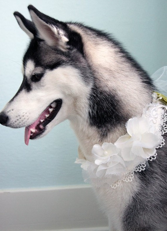 wedding or special occasion dog collar neck embellishment bib