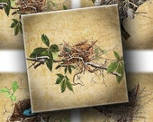 INSTANT DOWNLOAD Digital Sheet Aged Vintage Style Bird Nest Eggs Nature Tree Blurry Edges 3.8 x 3.8 Inch Squares for Coasters Crafts (CT1)