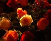 Roses I - 5x7 Matted Fine Art Print
