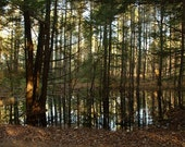 Water Tree II - ACEO
