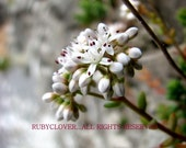 Ireland Garden Photography... White Flower on Stone Wall ...8x10