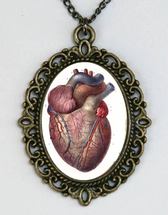 Vintage Anatomical Drawing Anatomical Hear...