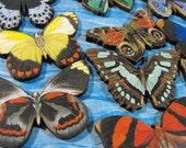 Wood Medium Sized Butterflies