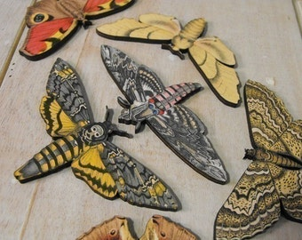 Elusive Moth Collection - A set of 7 different laser cut wood moths