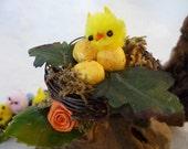 Birds Nest Barrette - Fun Fascinator - French Clip - Woodsy Weird - Spring Peep