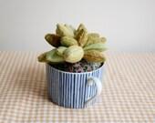 Stuffed Succulent