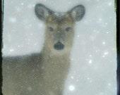Winter Blizzard Deer Snow TTV