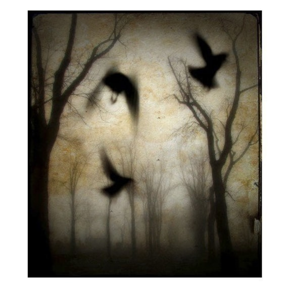 8X10 Gothic Crows Fog  Ravens Gothic Trees Photograph