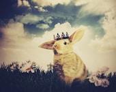 Little Bunny Prince