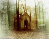 Woodland Fantasy Print, Secret Places, 8.5x11 Inch