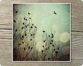 Flight, 8x8 Inch, Bird Print
