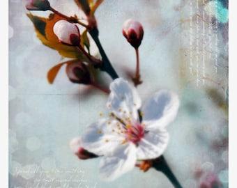 Flower Art Print, Dreaming II, 5x5 Inch Print